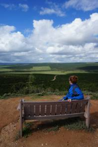 Addo Contemplation