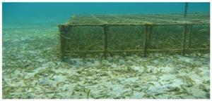 Sea Grass - Exclusion - James Fourqurean