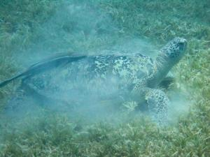 Turtle & Sea Grass - Clifton Beard
