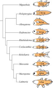 Actinistia Phylogeny
