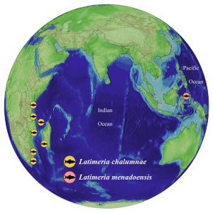 Coelacanth Distribution 1