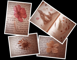 Pressed Flowers - Drawing_Fotor_Collage