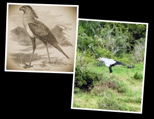 Secretary Bird - Drawing_Fotor_Collage - Freestyle