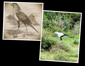 Secretary Bird - Drawing_Fotor_Collage - Freestyle