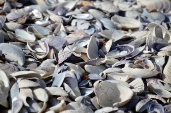 A Sea of Shells