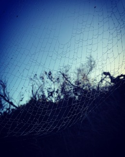 Dew-Laden Spider Web