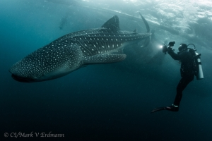 Whale Shark and Zach