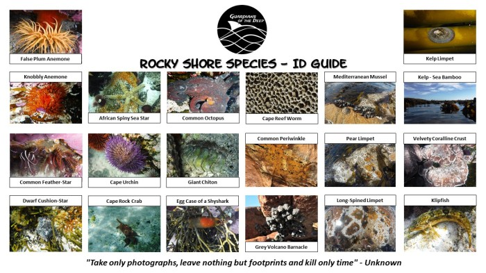 Guardians - Rocky Shore ID Guide