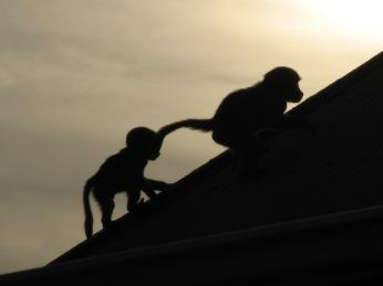 Juveniles playing at dusk