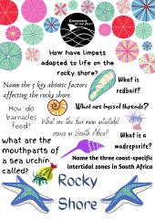 Lockdown Learning - Rocky Shore Quiz