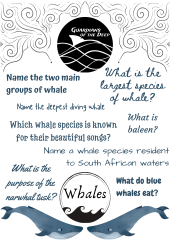 Lockdown Learning - Whale Quiz