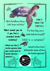 Lockdown Learning - Turtle Quiz